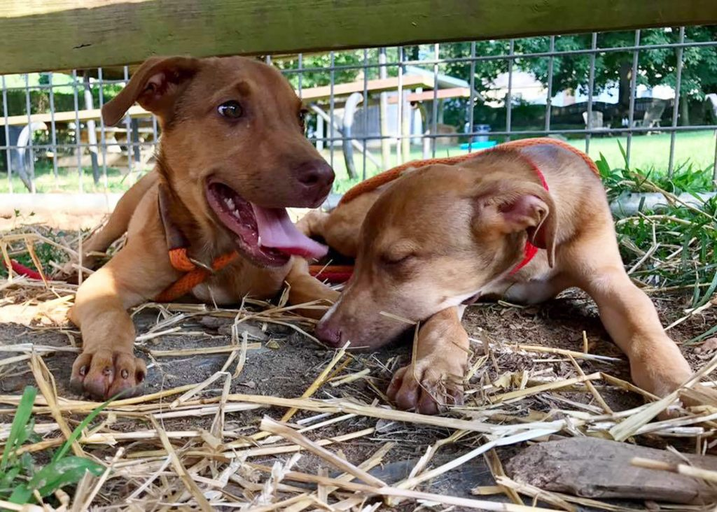 Providence Animal Center humane investigation - two dogs