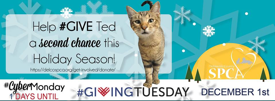 Get Social With Us On Giving Tuesday Providence Animal