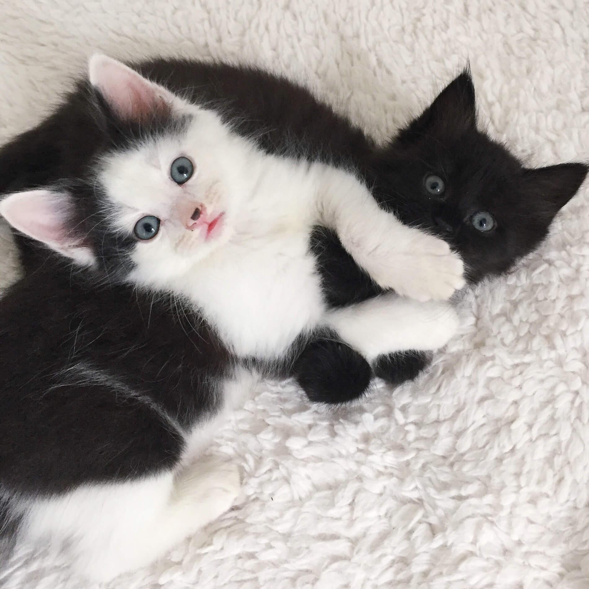 Providence Animal Center two kitten