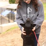 Providence Animal Center basic obedience training