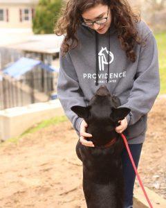 Providence Animal Center basic obedience training