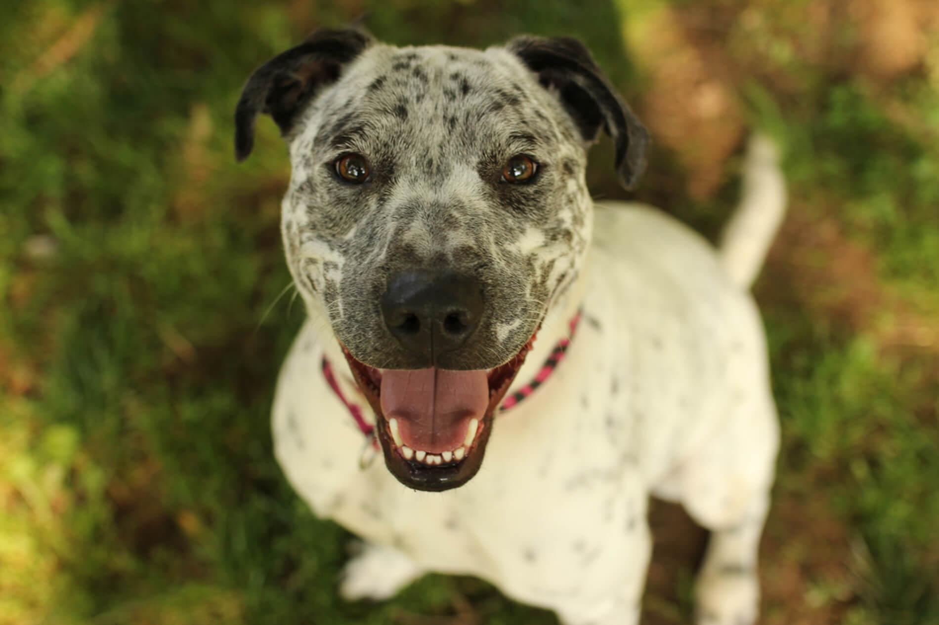 Providence Animal Center white dog