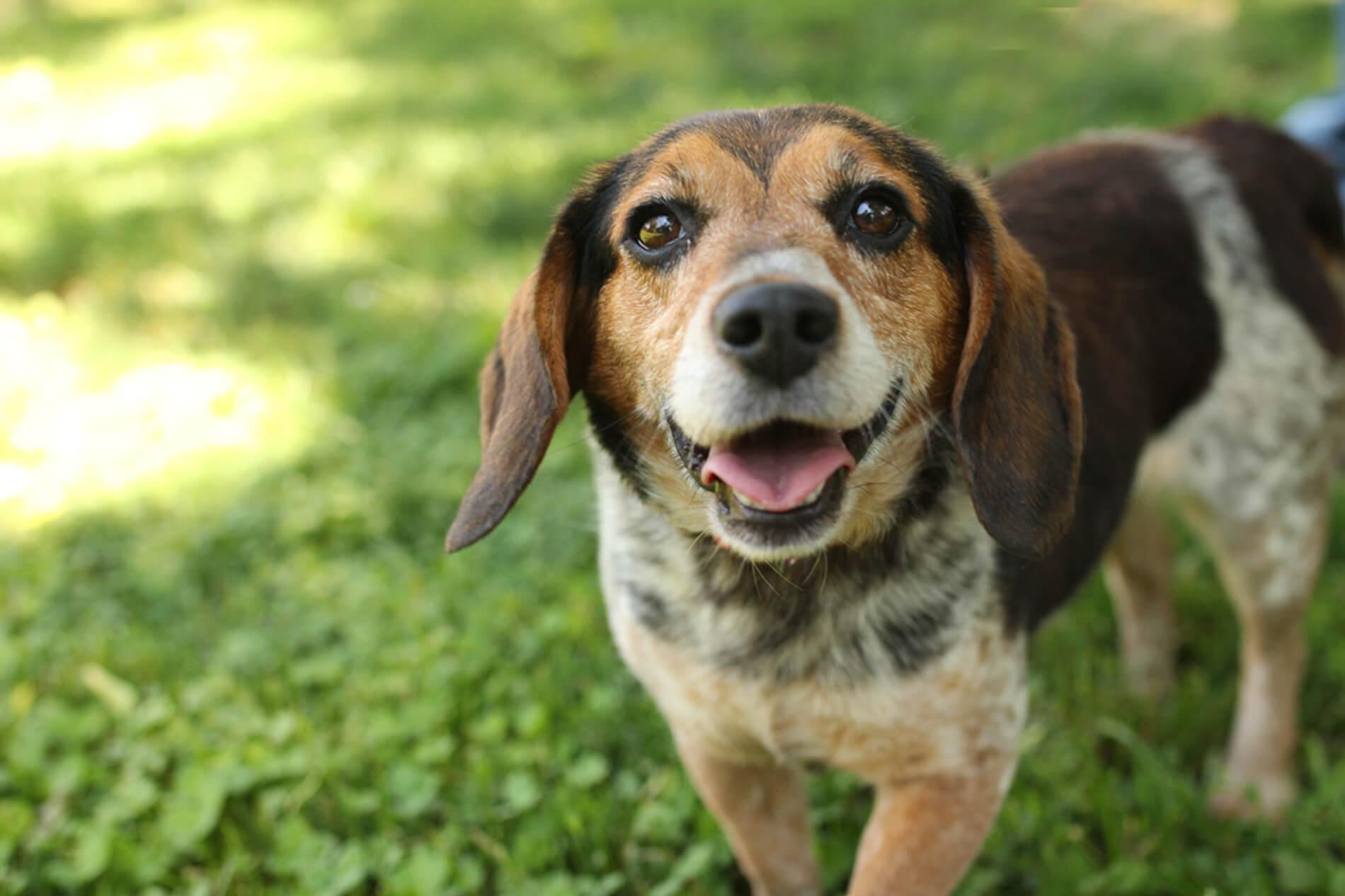 Providence Animal Center life savers club