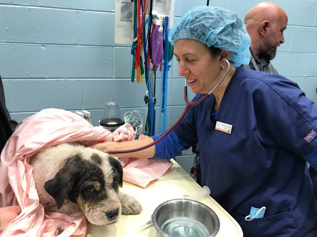 Providence Animal Center Penn vet