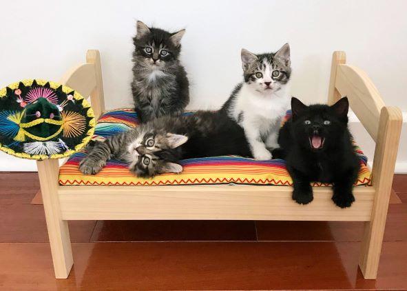 cinco-de-meow