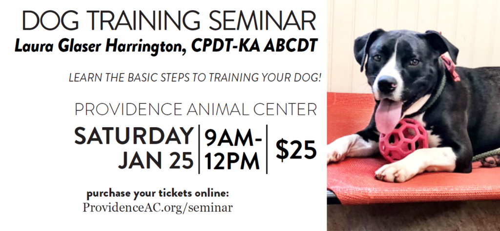 dog training seminar header