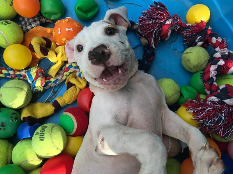 Puppy_balls_small