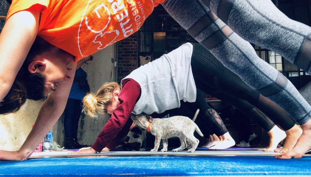 puppy yoga 2