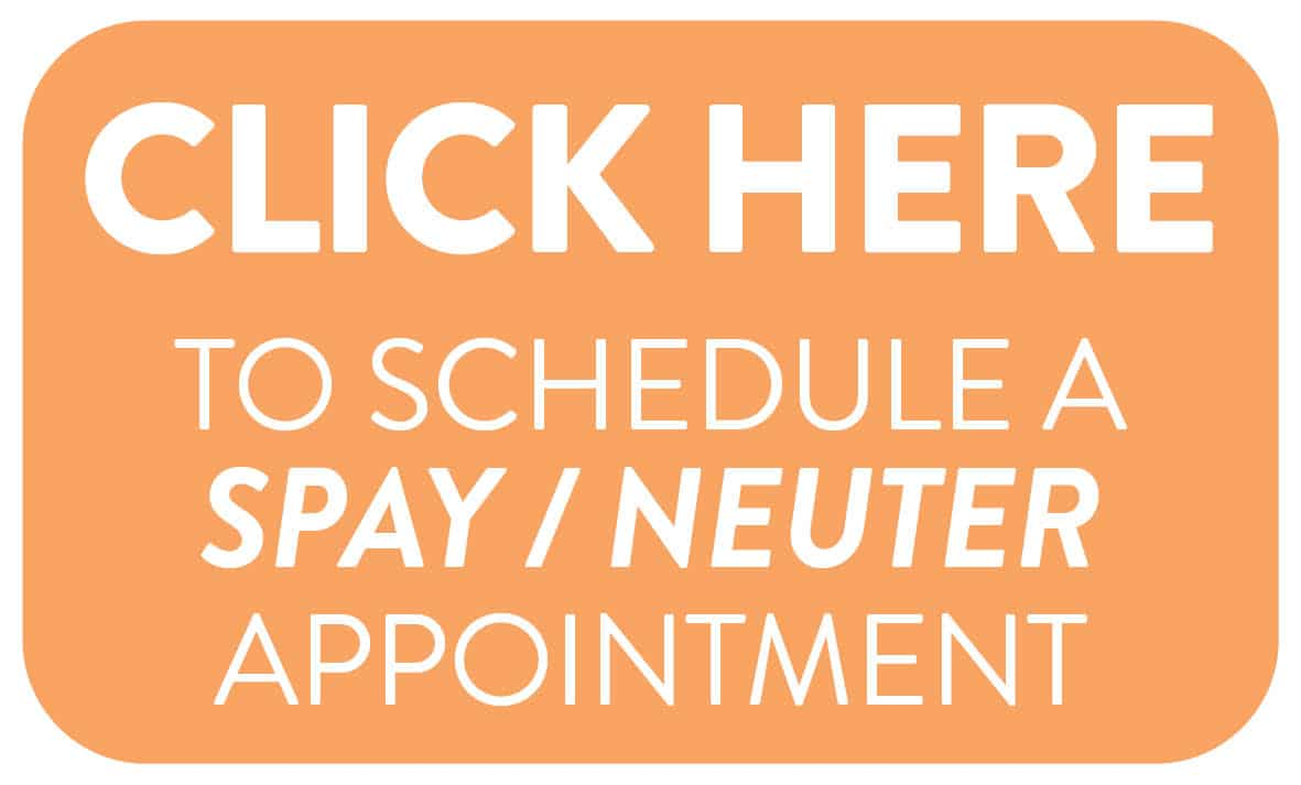 spay neuter button