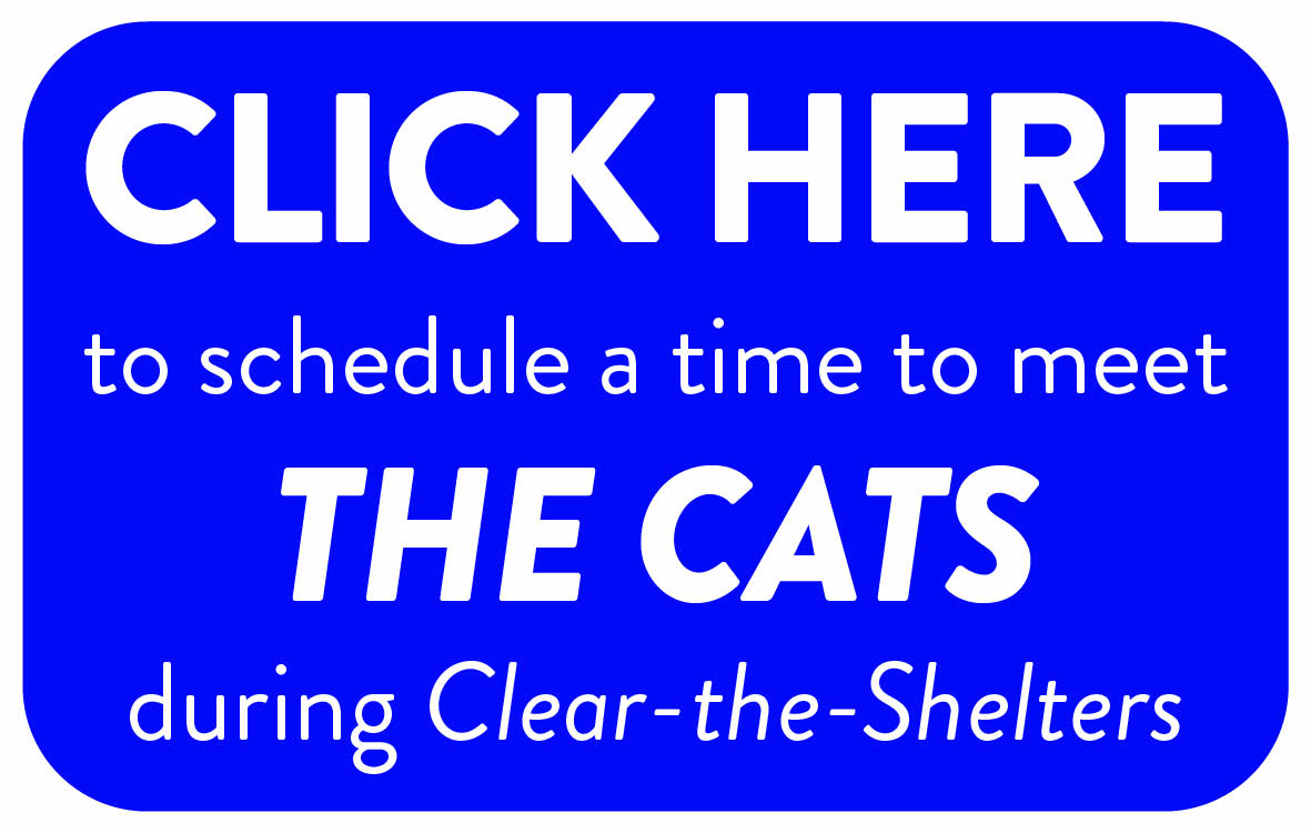 Schedule a time to meet a CAT3