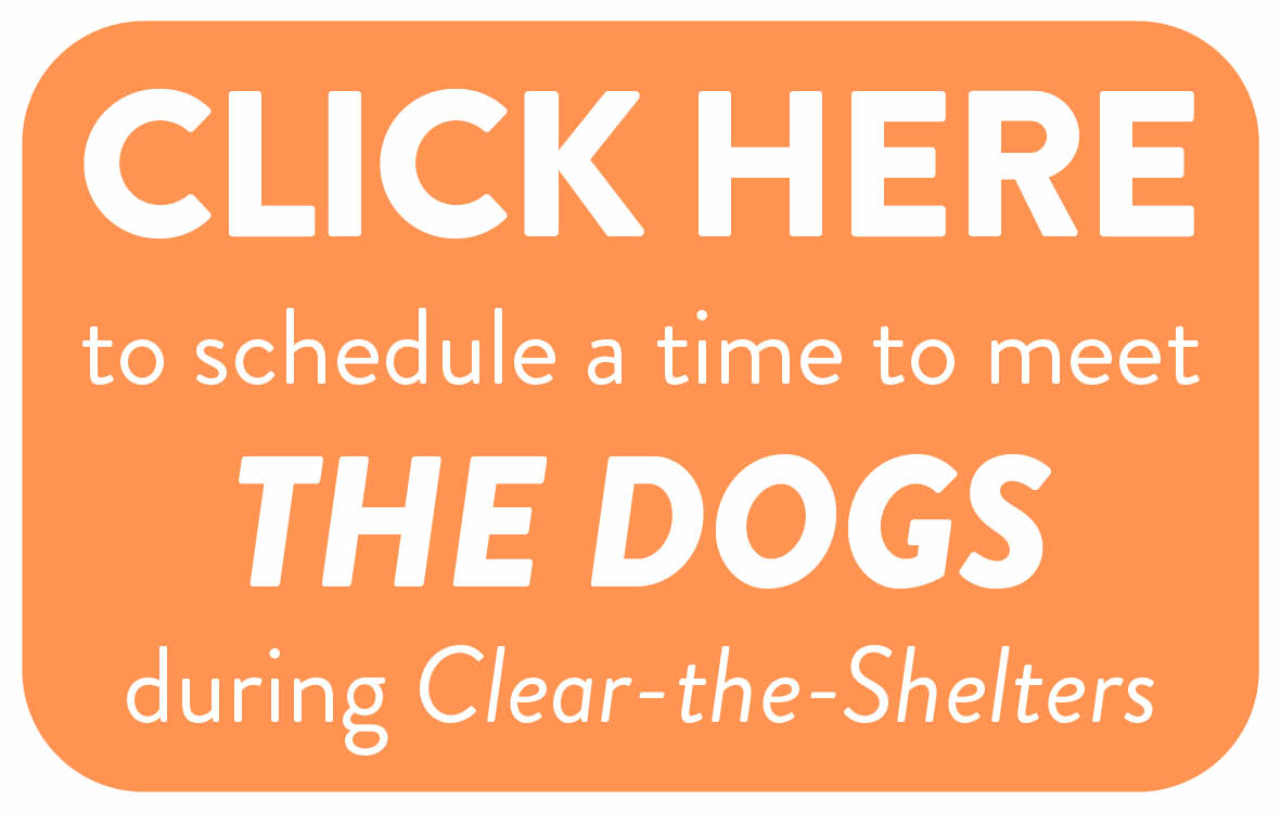 Schedule a time to meet a DOG3