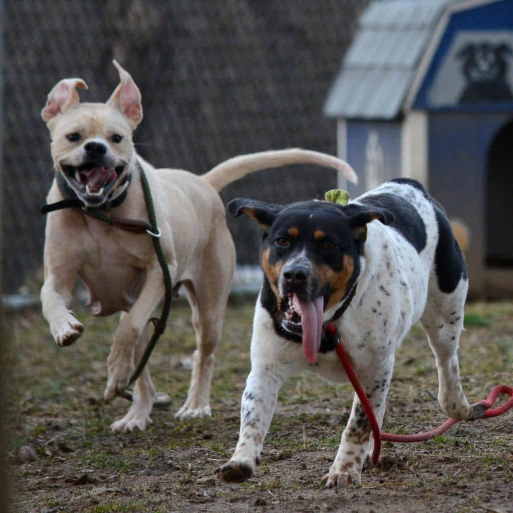Adult dog social hour